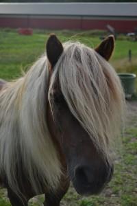 hästar 492